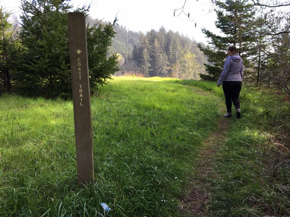 OCT marker and trail