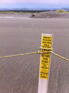 Snowy Plover Closure